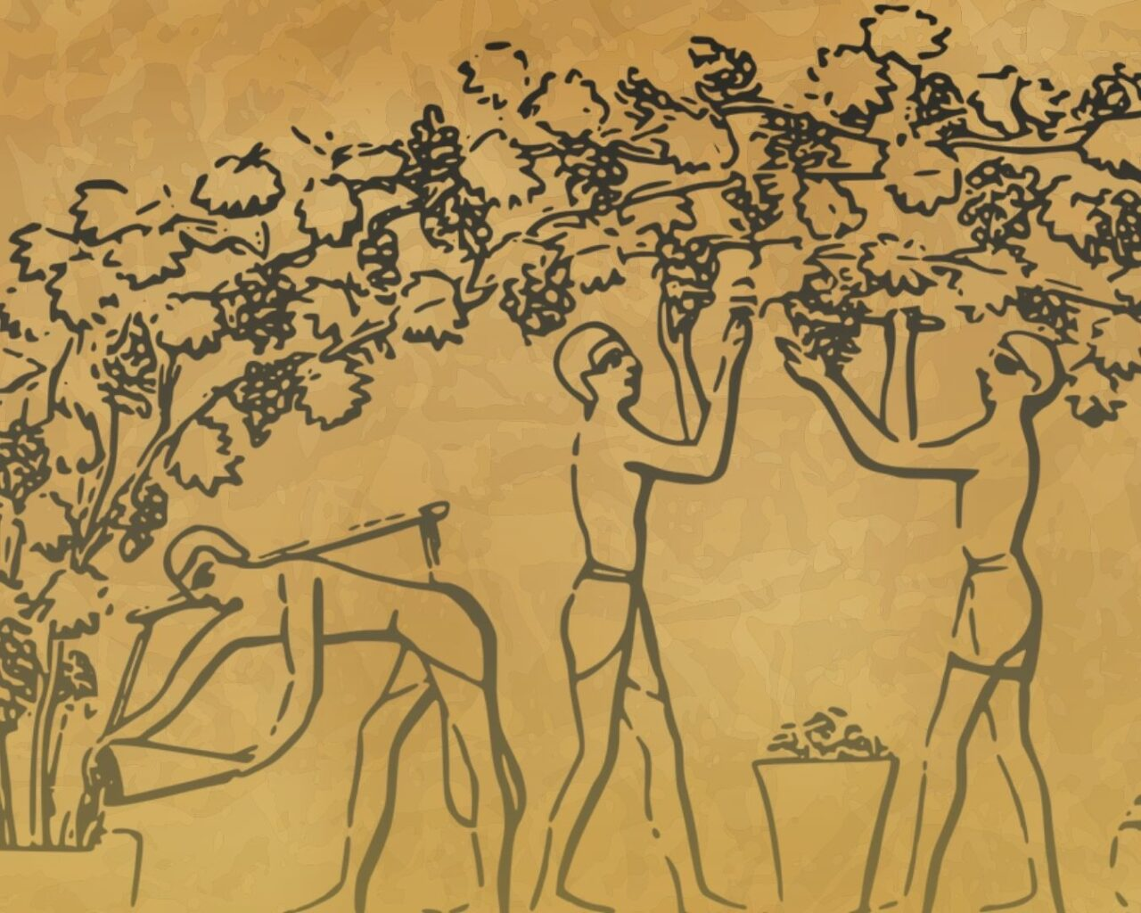 Historia de la viticultura